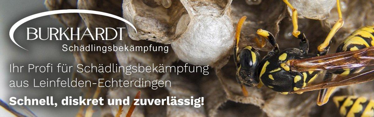 Schädlingsbekämpfung Benningen (Neckar)   🥇 Burkhardt » Kammerjäger / Wespen