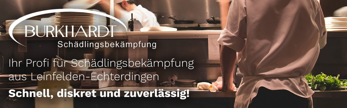 Schädlingsbekämpfung Böblingen | 🥇 Burkhardt » Kammerjäger / Wespen