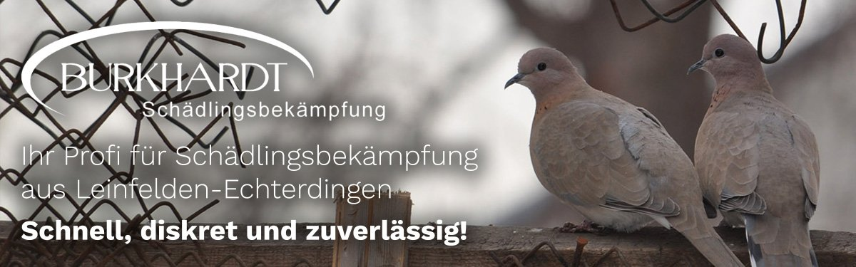 Schädlingsbekämpfung Leinfelden-Echterdingen   🥇 Burkhardt » Kammerjäger & Wespen