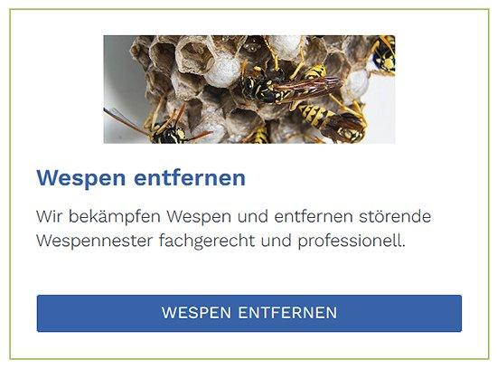 Wespen entfernen