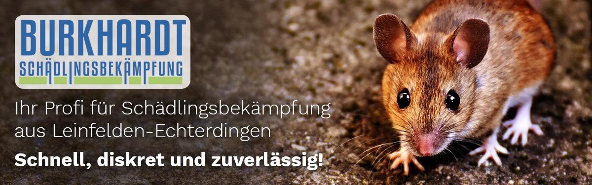 Schädlingsbekämpfung Ostfildern | 🥇 Burkhardt » Kammerjäger & Wespen