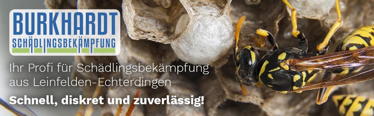 Schädlingsbekämpfung Waldenbuch | 🥇 Burkhardt » Kammerjäger & Taubenabwehr